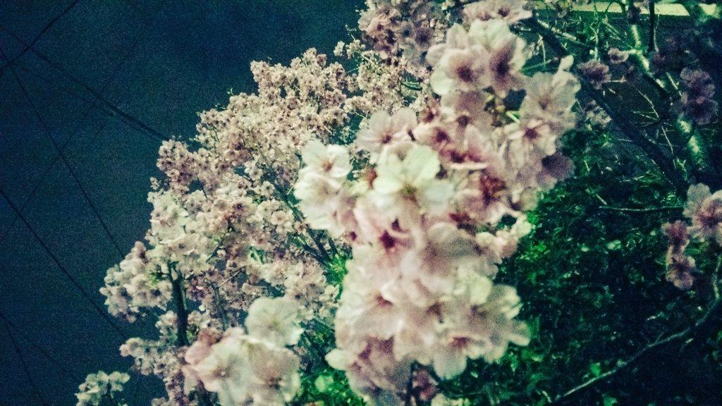 日々の中で春